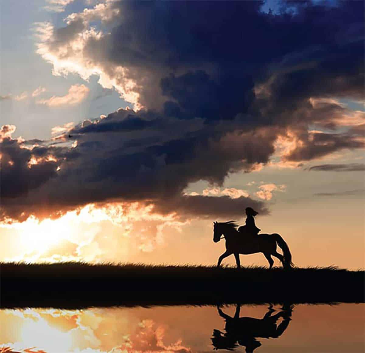 horse-as-mirror-2