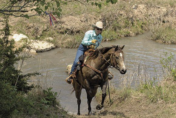 Competetive Trail Horse