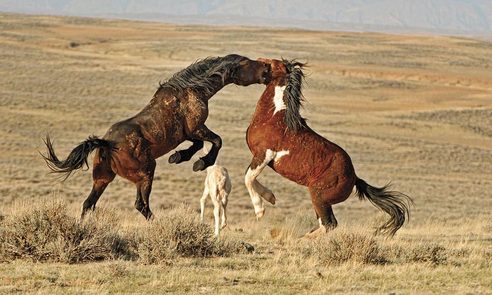 Mustang Meg Wild Mustangs Cowgirl Magazine