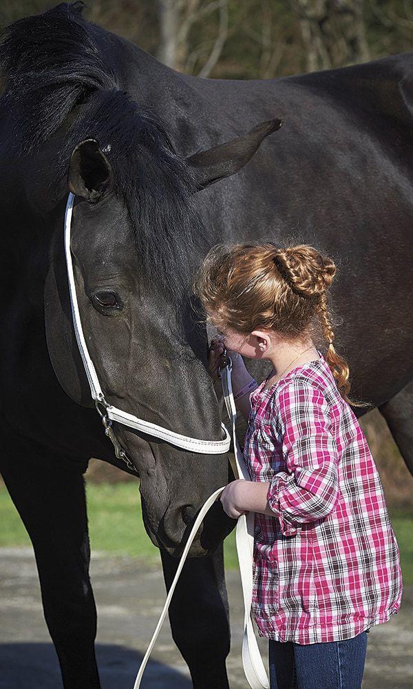 Percheron Horse Cowgirl Magazine