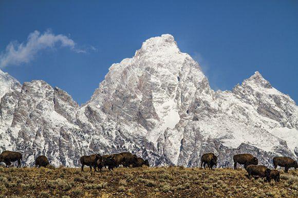Jackson Wyoming Travel