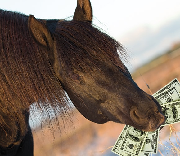 Moneyhorse.jpg