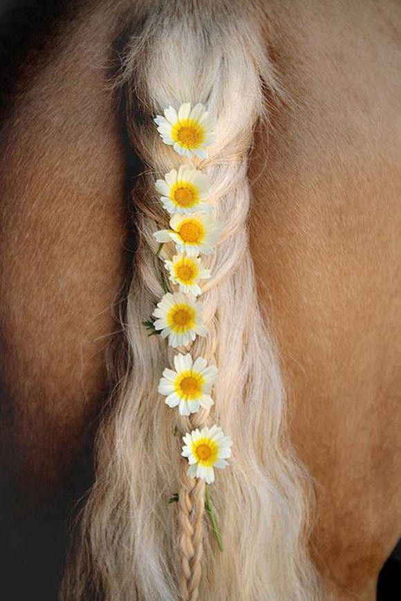 Daisy strand in the tail
