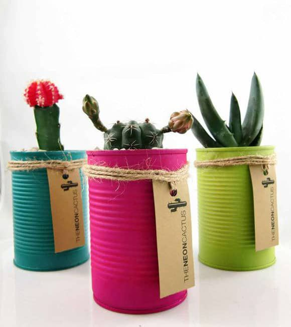 Recycled Tin Cans with Cacti