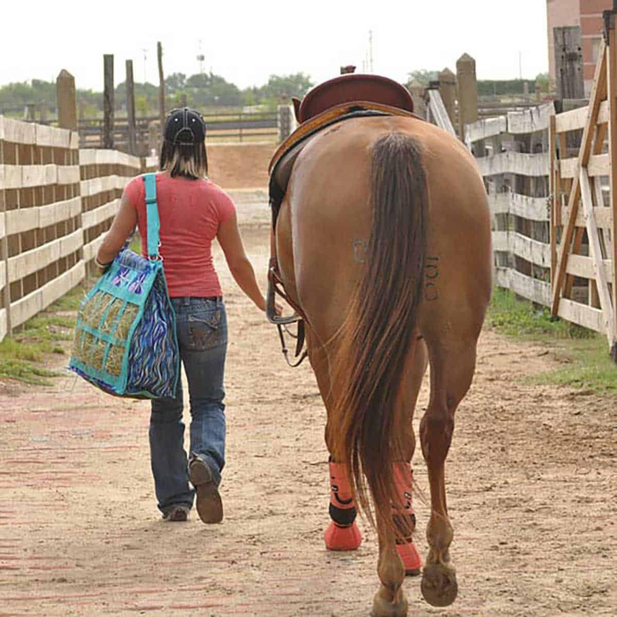 Classic-Equine
