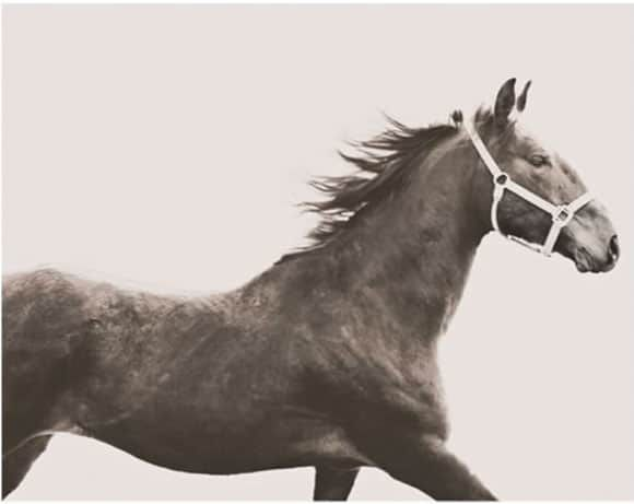 Vintage horse art piece