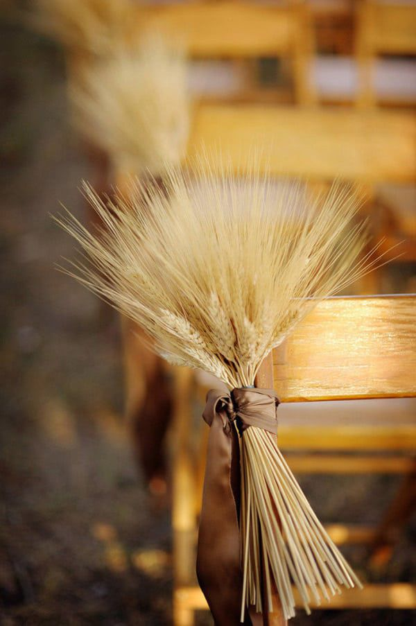 Wheat-Bundled-to-a-Chair