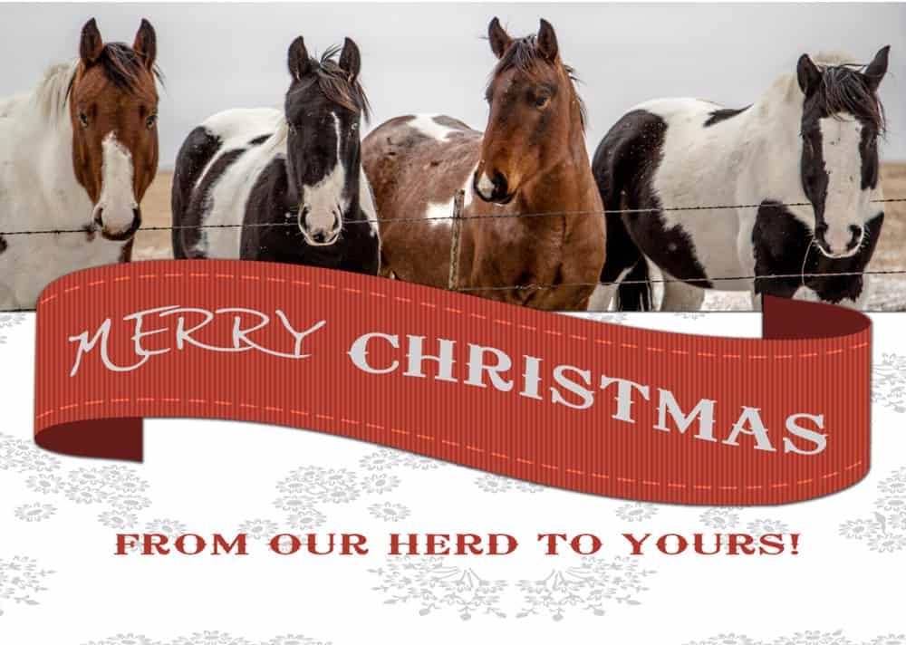 Snail Mail: Holiday Horse Cards - COWGIRL Magazine