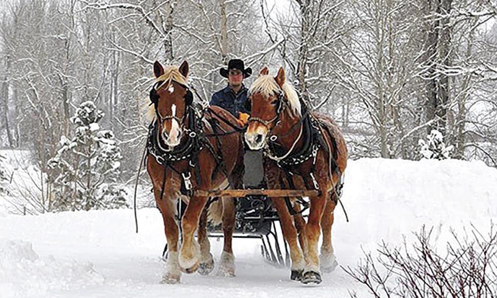 sleigh-rides-2-520x5701-520x570