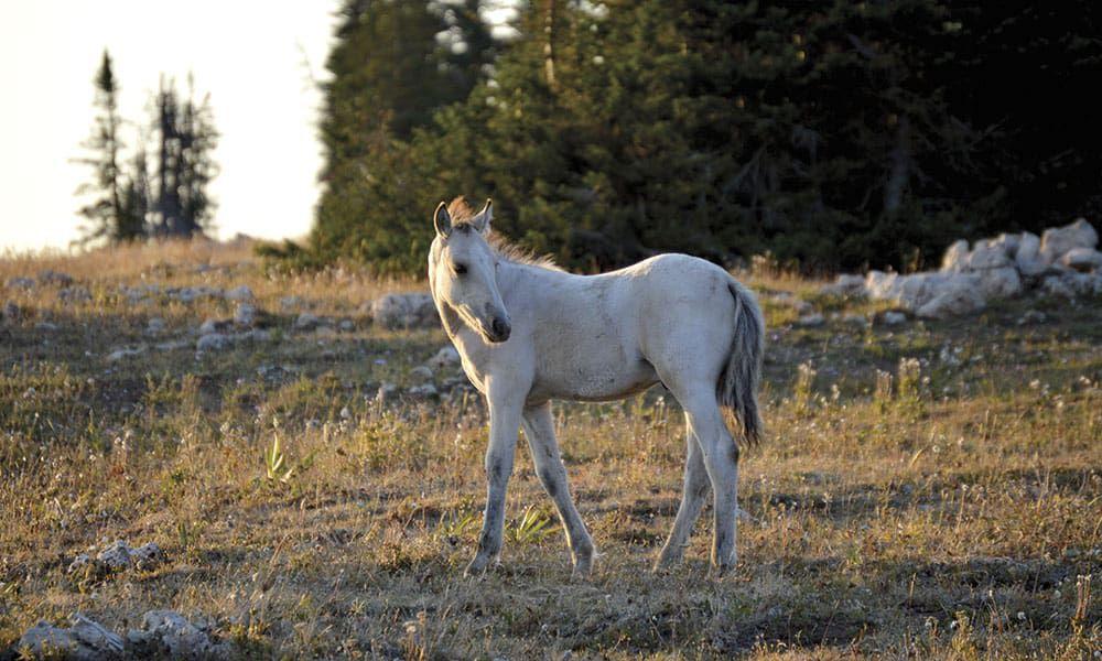 Mustangs Mustang Horses Wild Horses Cowgirl Magazine