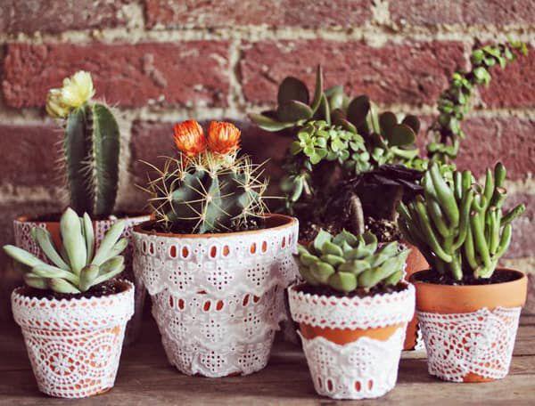 Cowgirl - Cactus & Succulent Inspo