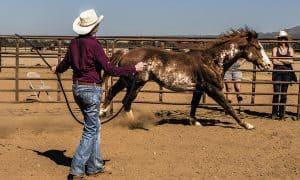 cowgirl rising