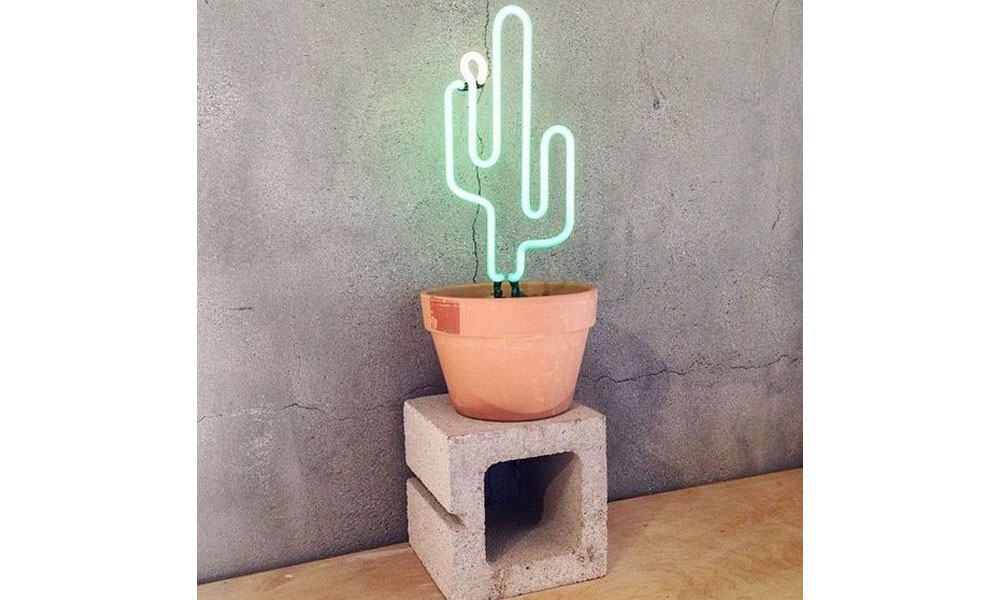 Cacti gifts for the graduate