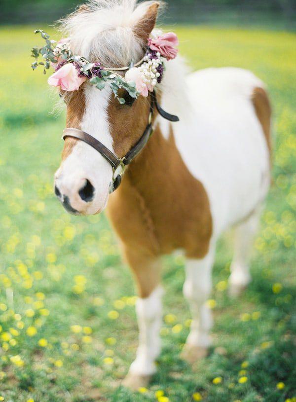 horses & flowers