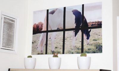 horse DIY projects