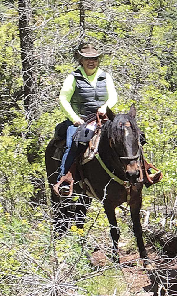 comfort trail saddles