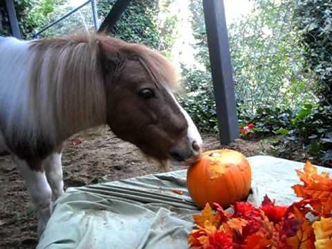horse-eating-pumpkin