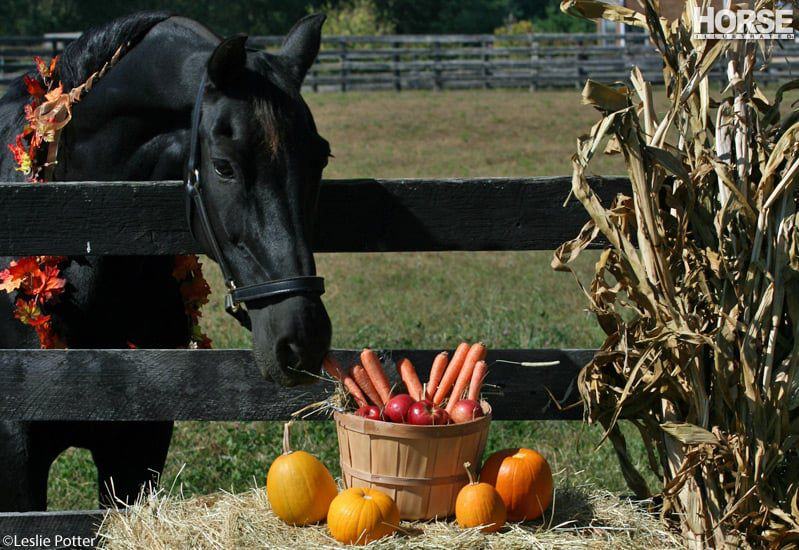 horse-with-pumpkin_800 (1)
