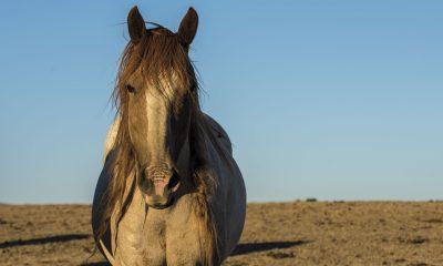 horses-mustangs
