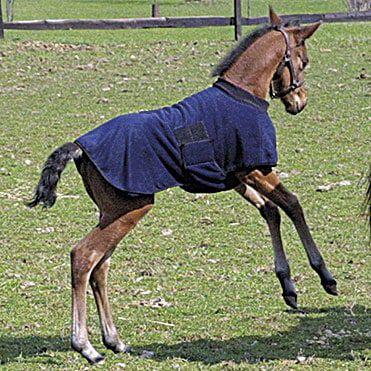 tt_fleece-foal-warmer-2