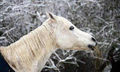 Cowgirl - Feeding Tips