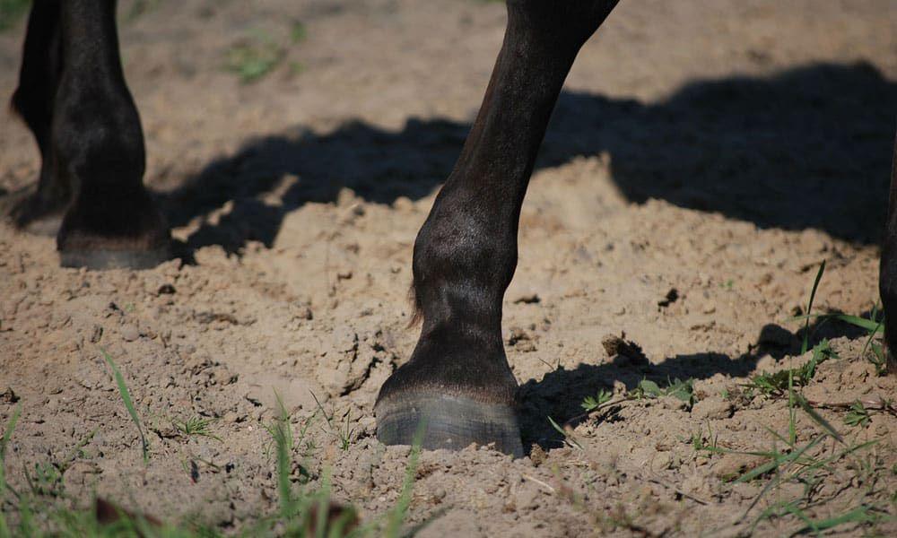 Cowgirl - Hoof Health