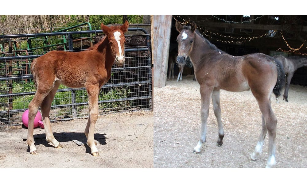 Cowgirl - Orphan Foals