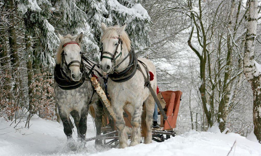 Cowgirl - Sleigh Ride