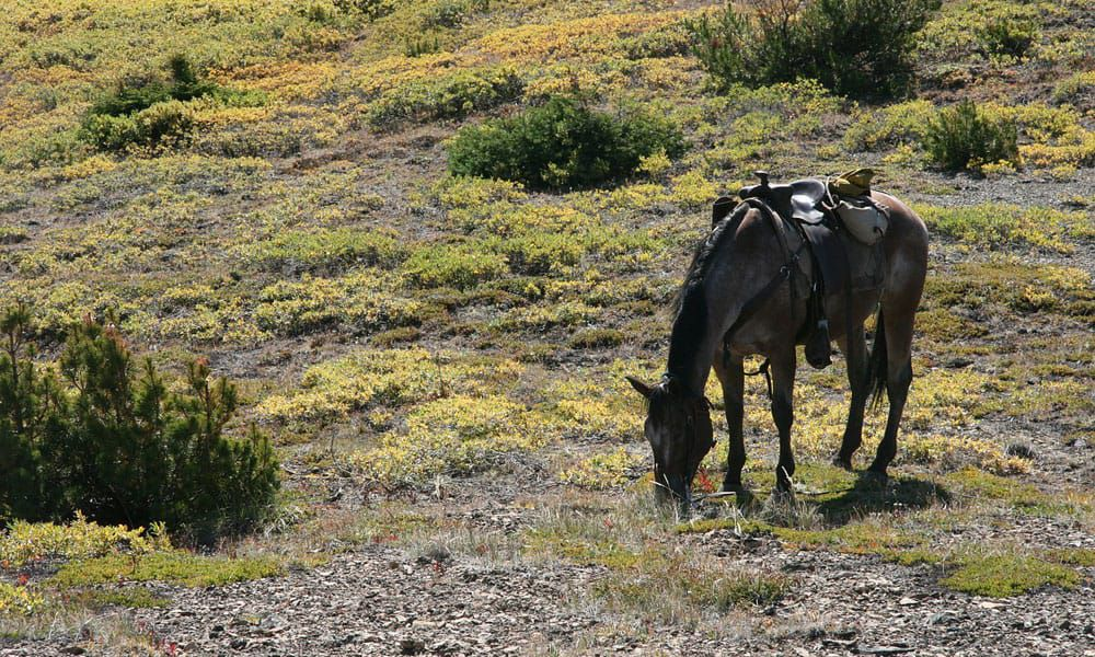 Cowgirl - Trail Horses