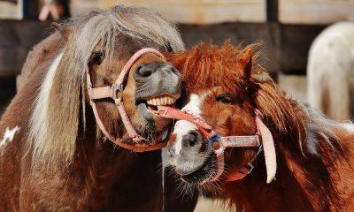 Cowgirl - Treats
