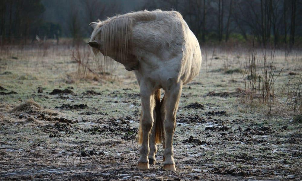 Cowgirl - Colic