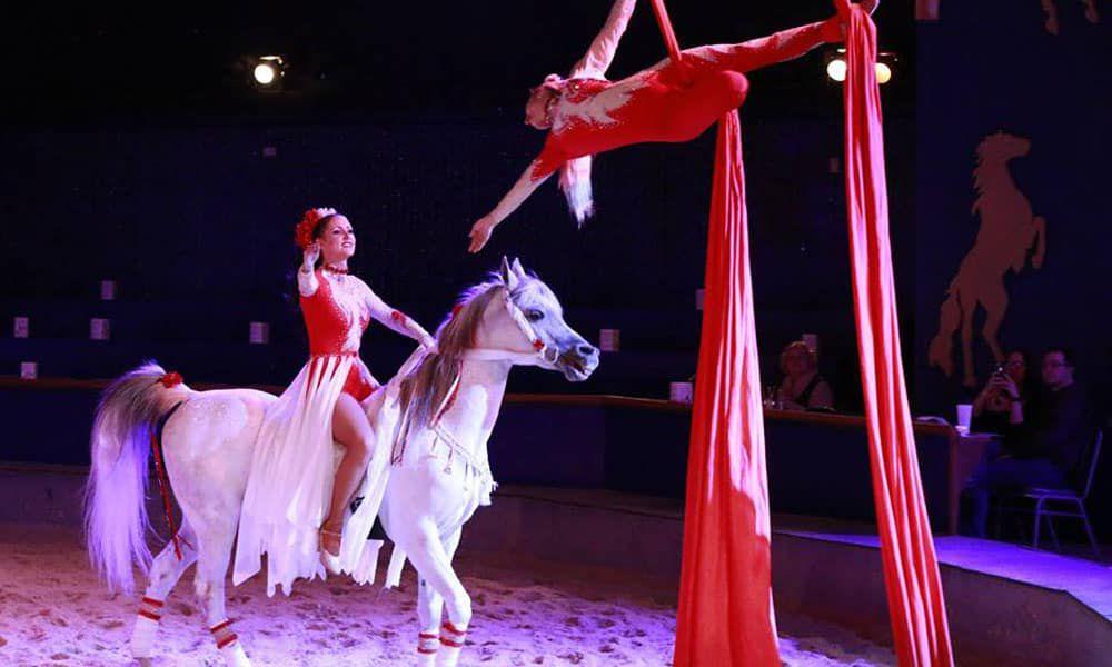 Cowgirl - Dancing Horses