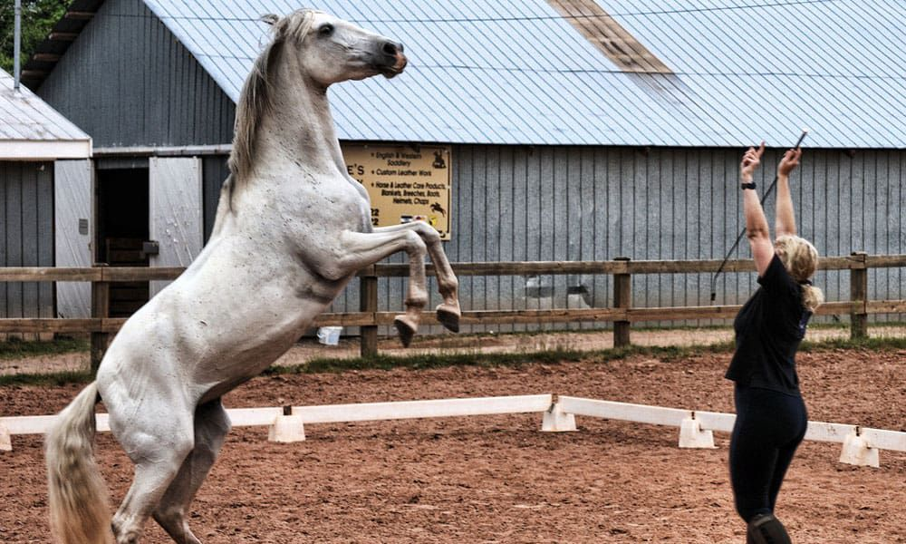 Cowgirl - Liberty Training