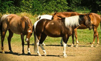 Cowgirl - Buddy Sour