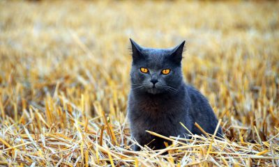 Cowgirl - Cat