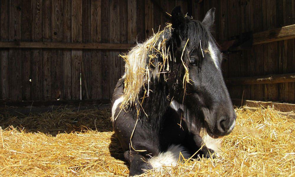Cowgirl - Bedding