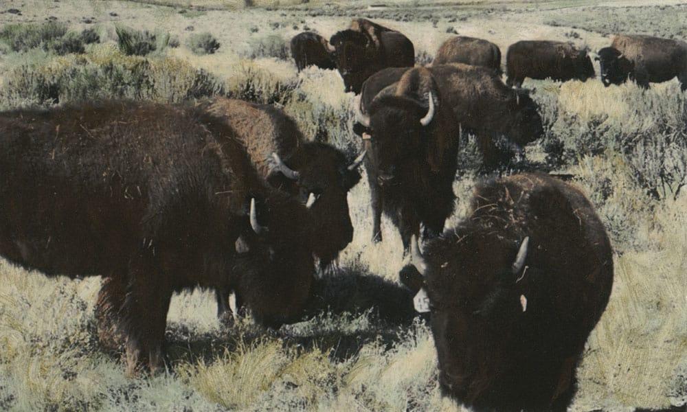 Scenic Mesa Ranch Cowgirl Magazine