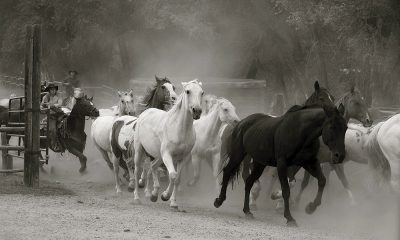helmicki cowgirl magazine