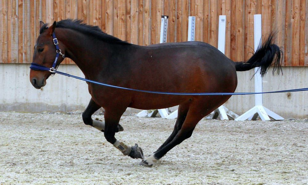 Cowgirl - Lunge