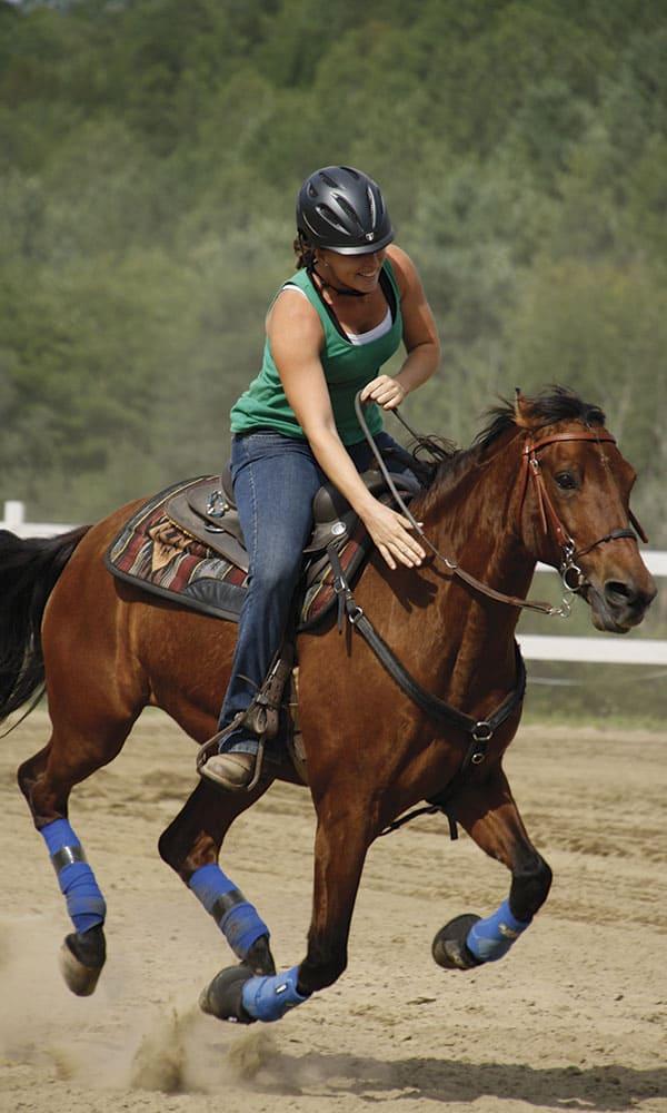Morgan Horses Cowgirl Magazine