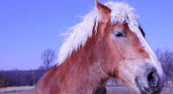 Cowgirl - Senior