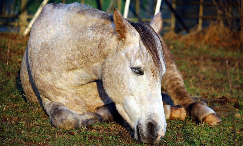 Cowgirl - Sleep