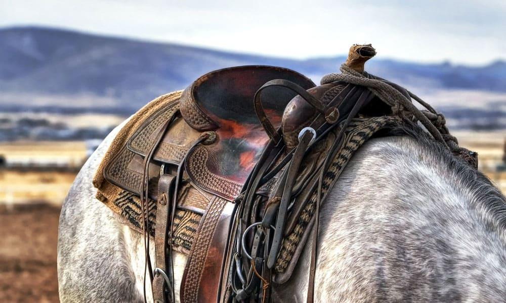 Cowgirl - Saddle