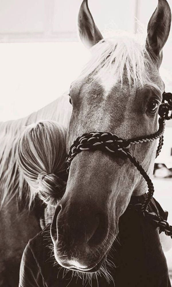 Equine Massage Therapy The Key To Keeping Your Horse