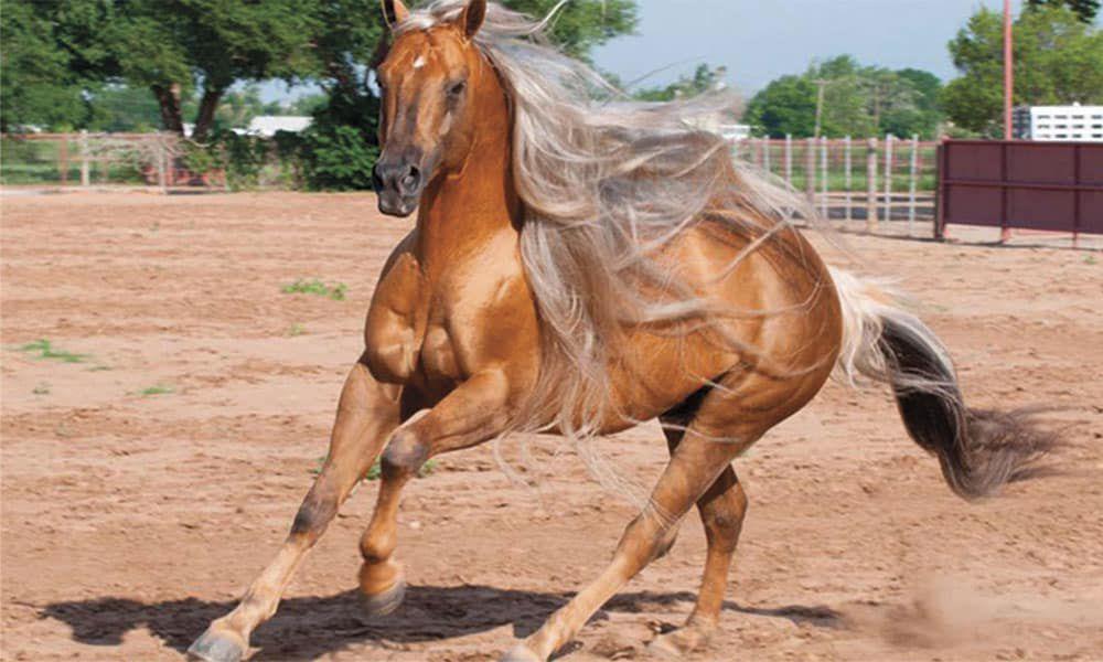 Bots Sots Horse Sale Sheridan Wyoming Cowgirl Magazine