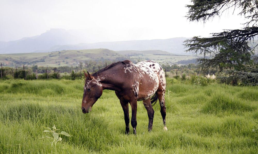 Cowgirl - Pasture