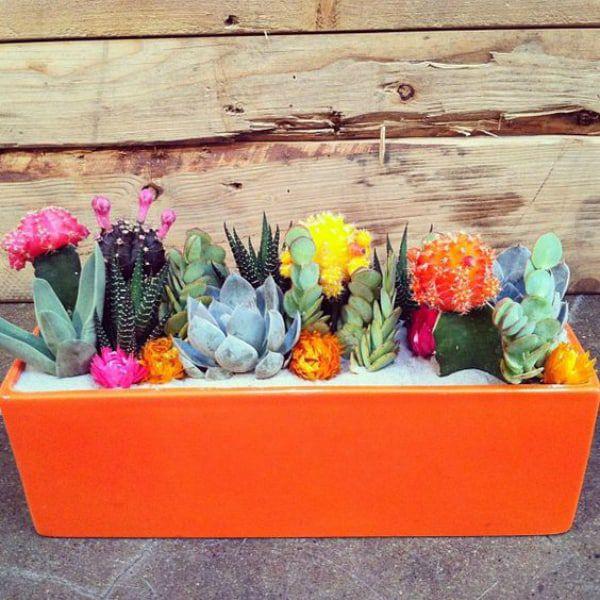 cactus cacti and succent garden cowgirl magazine