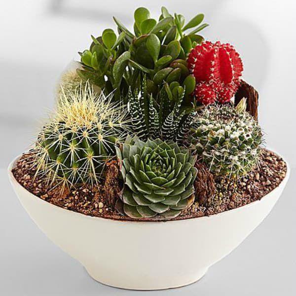 cactus cacti garden cowgirl magazine