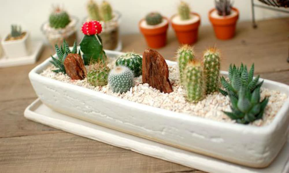 cacti cowgirl magazine