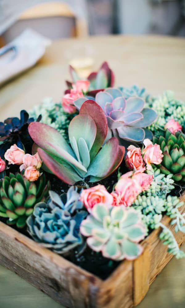 cactus succulent cowgirl magazine